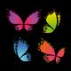 Papillons quatre couleurs