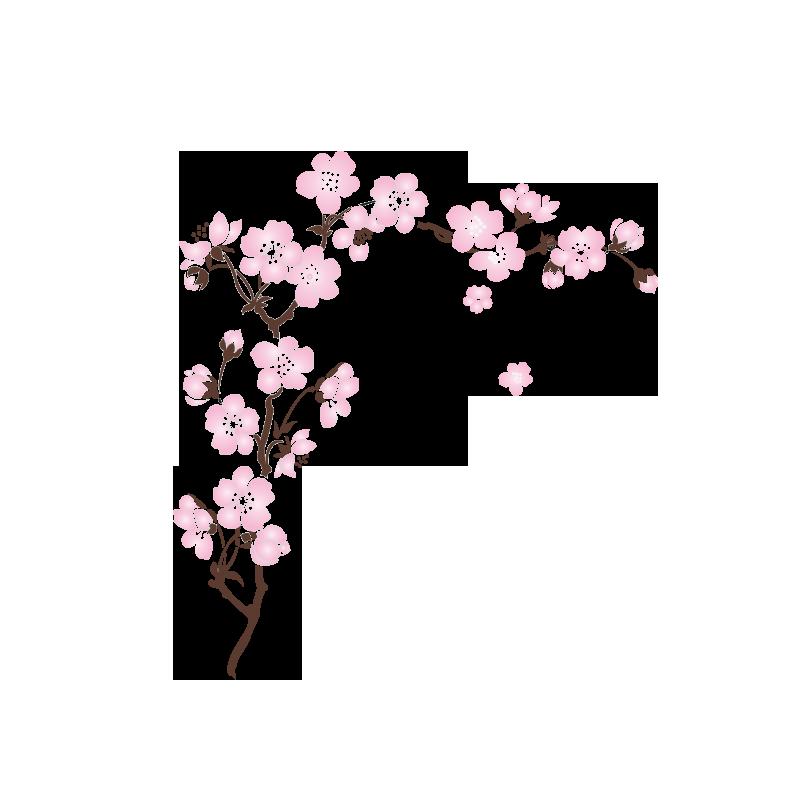 Sticker sakura cerisier - Cerisier en fleur dessin ...